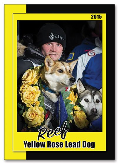 Iditarod Trading Card Http Www Customsportscards Com Select Cfm Custom Trading Cards Pets Therapy Dogs Police Canine Dog Leads