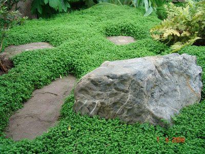 Evolution du jardin japonais helixine garden pinterest du jardin japonais et le jardin - Couvre sol jardin japonais ...