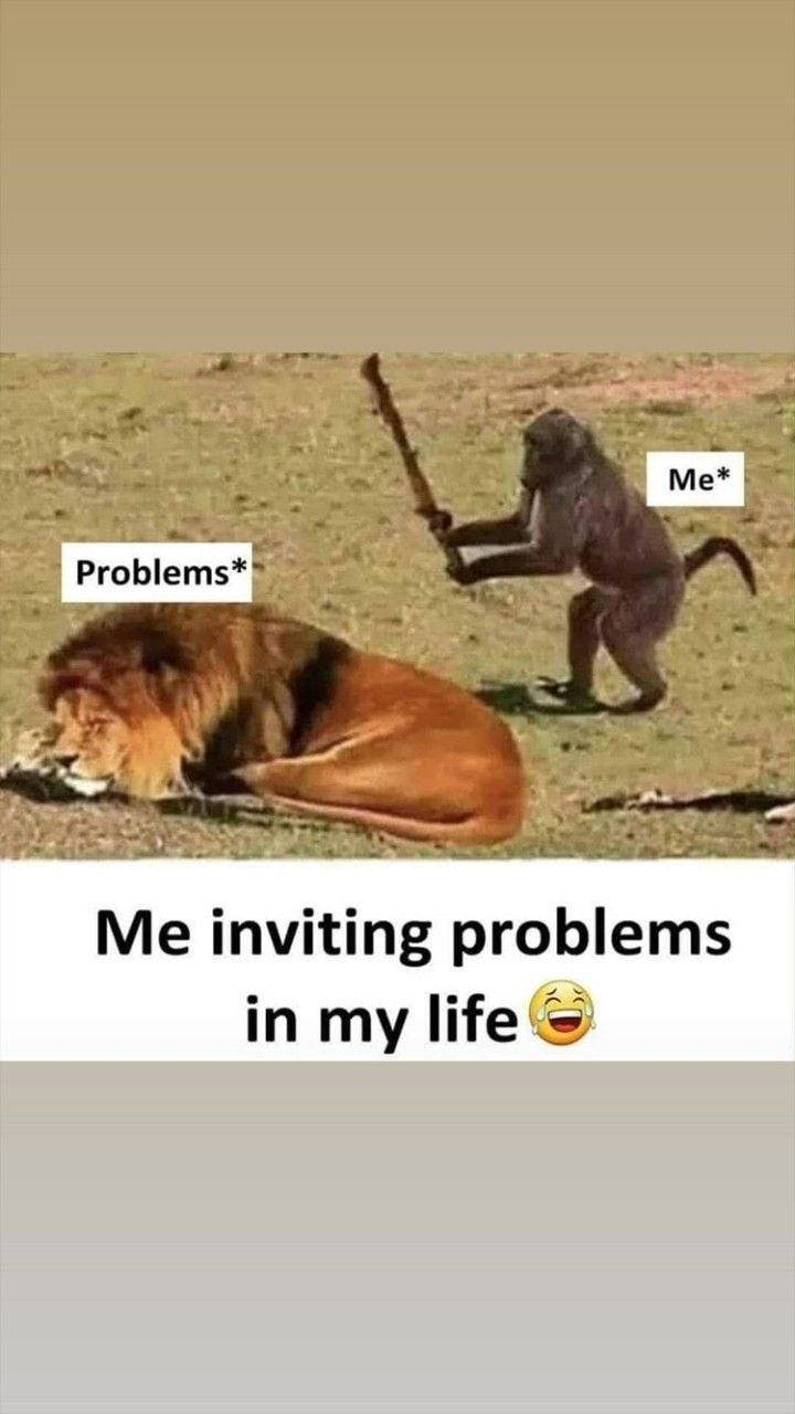 Pin By Palak Pandey On Ridiculous Funny Memes Crazy Funny Memes Funny Animals