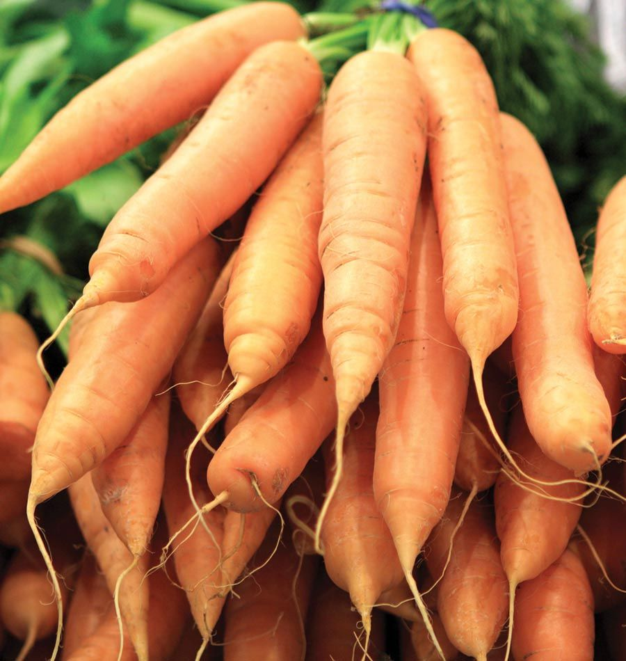 Plant Ingot Carrot Seeds In Your Organic Vegetable Garden. Learn When To  Plant Carrot Seeds