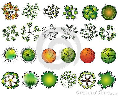 Landscape Design Symbols Set Of Colored Treetop Symbols For
