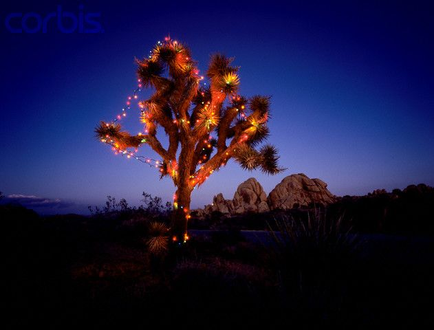 Christmas Tree In The Desert.Best Christmas Tree In Arizona As I Don T Believe In Faking