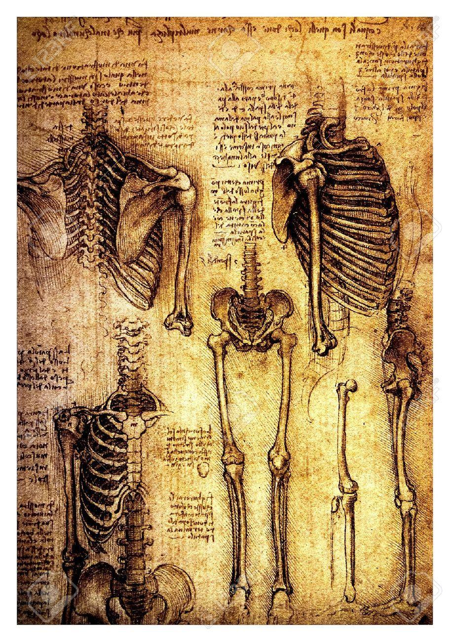 Leonardo Da Vinci - Anatomía del cuerpo humano (912×1300