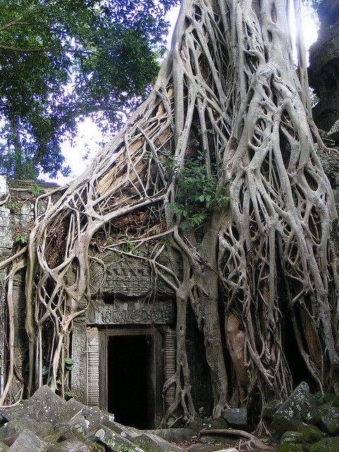 """Tomb Raider"" tree"