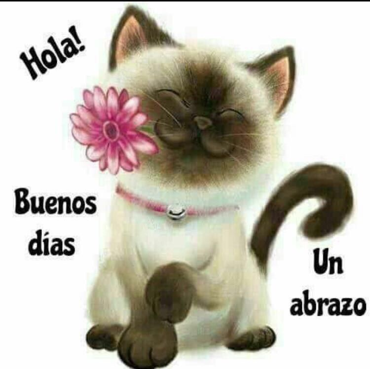 Pin by laisa on Quotes | Good morning in spanish, Good ...