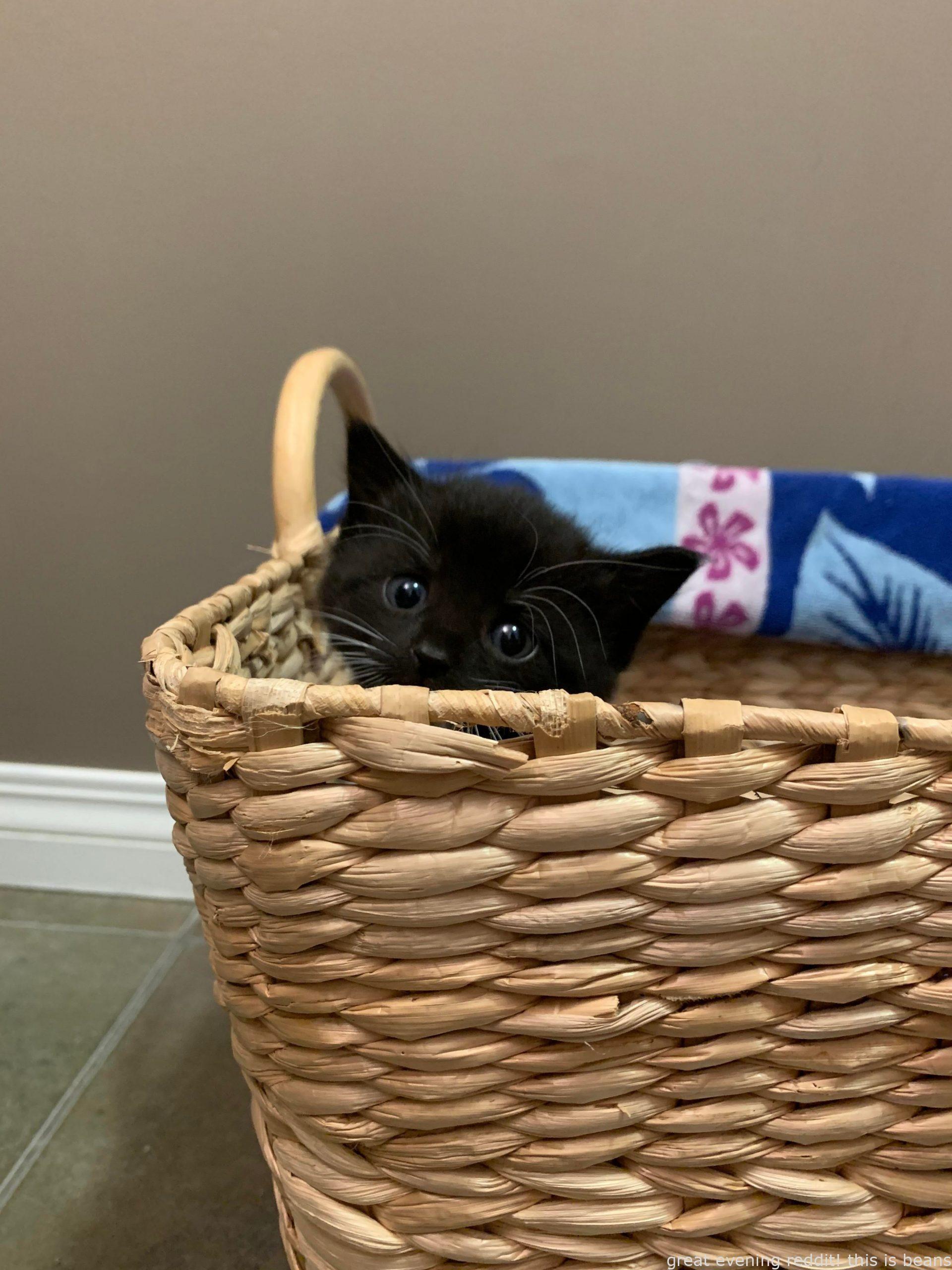 Pin On Idea Cute Cat Stuff