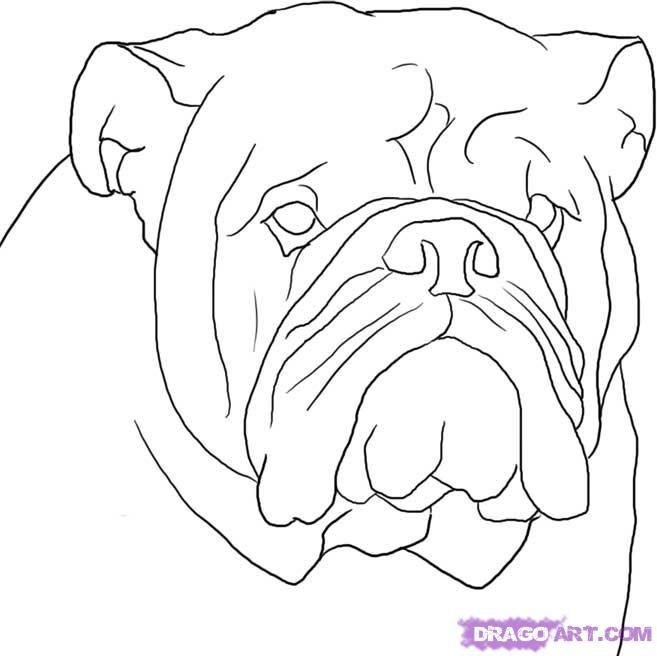 How To Draw A Bulldog By Dawn Bulldog Drawing