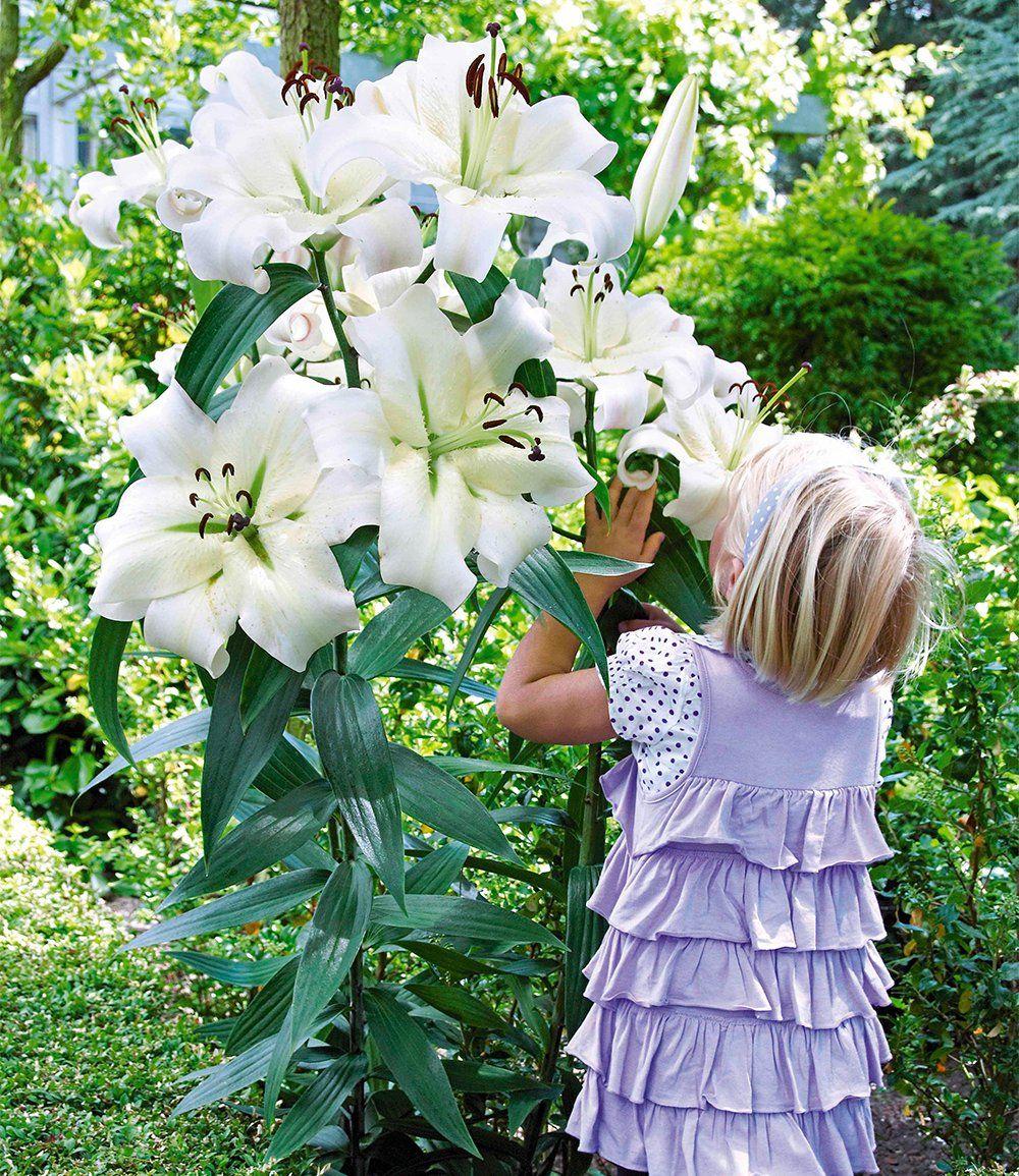 Tree-Lily® 'Pretty Woman'