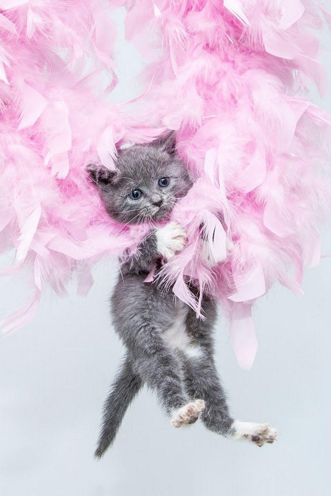 фото котенок поздравляю с днем рождения слышал