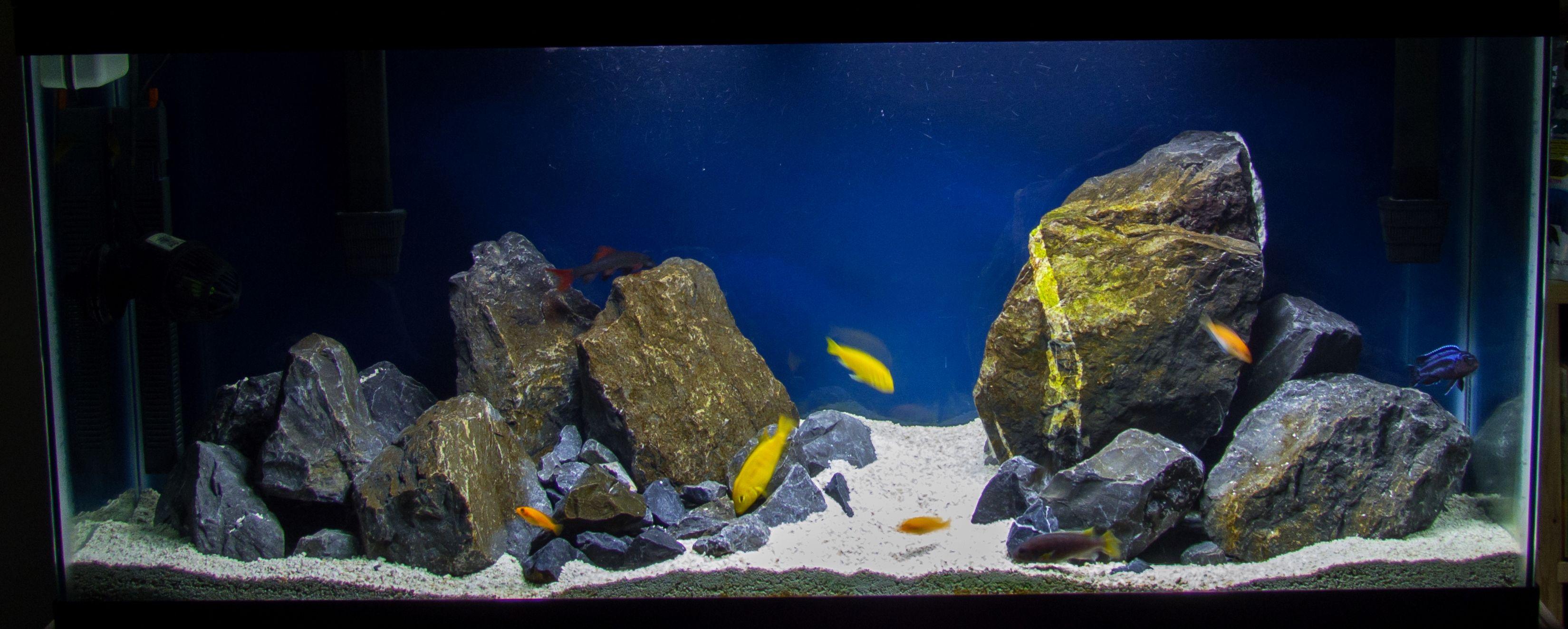 Aquascape Ideas Aquascaping African Cichlid Aquarium