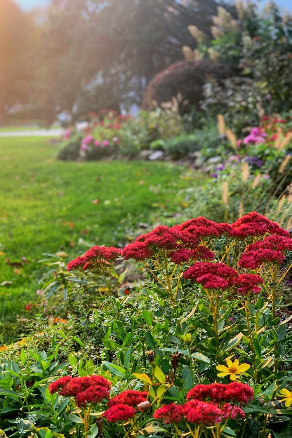 Not sure how to start preparing the garden for winter? Follow these tips to get your garden ready for colder temps. #preparinggardenforwinter #gardeningtips #gardentips #gardentour #gardendesign #gardenimages #cottagegarden #fallgardening #gardening #garden #plantingideas #flowergarden #cottagegardenstyle #prettyflowers #fallgardenflowers