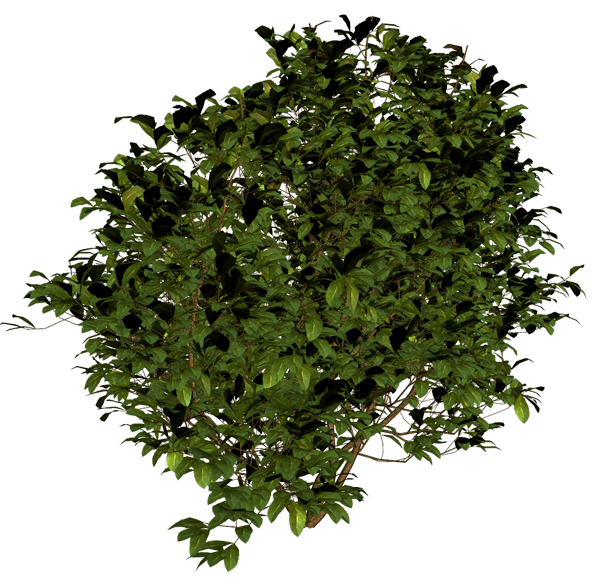 Bush Png Image Trees Top View Tree Plan Png Trees To Plant