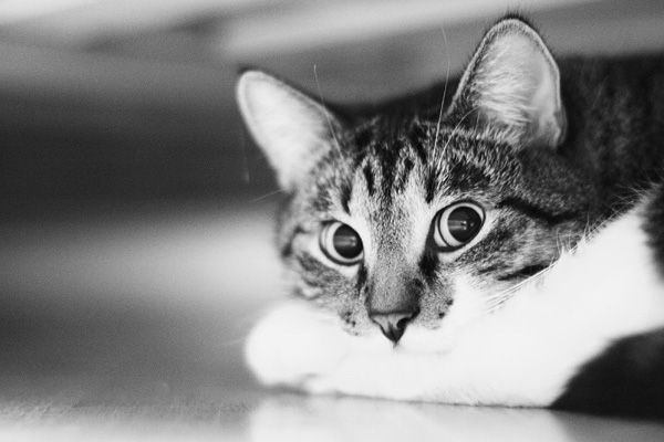 under the bed)
