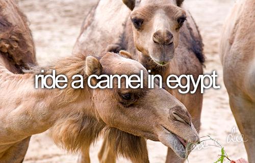 bucket list:  ride a camel in egypt