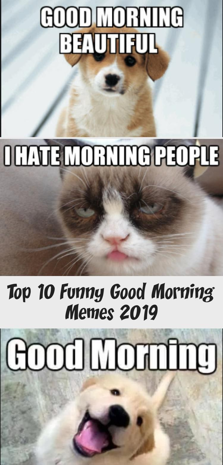 Good Morning Memes 2019 : morning, memes, Funny, Morning, Memes, Memes,