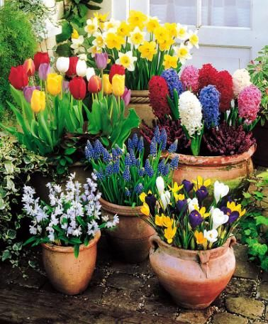 Container gardens filled with spring bulbs spring bulb inspiration container gardens filled with spring bulbs bulb flowerspotted mightylinksfo