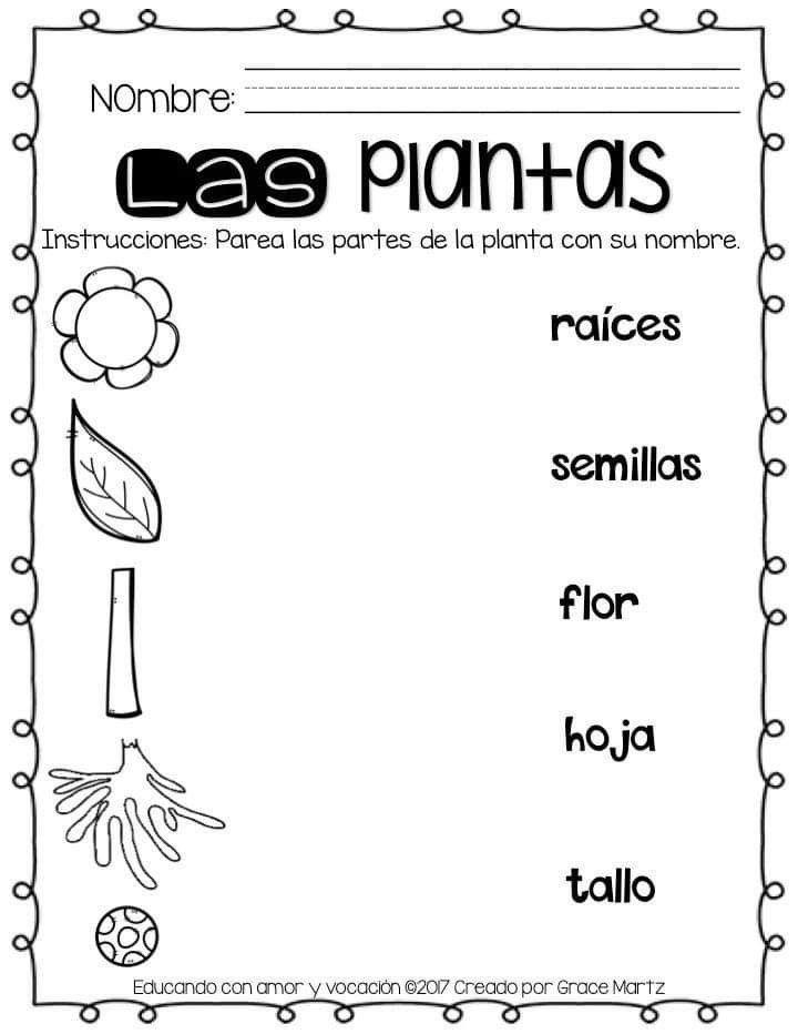 Pin De Maricruz En Educacion Basica Partes De La Planta