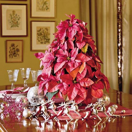 New Looks for Poinsettias Poinsettia, Poinsettia tree and