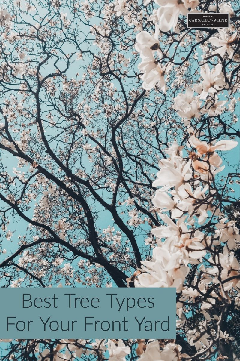 How To Select The Best Trees For Your Yard Spring Wallpaper Sakura Tree Cherry Blossom