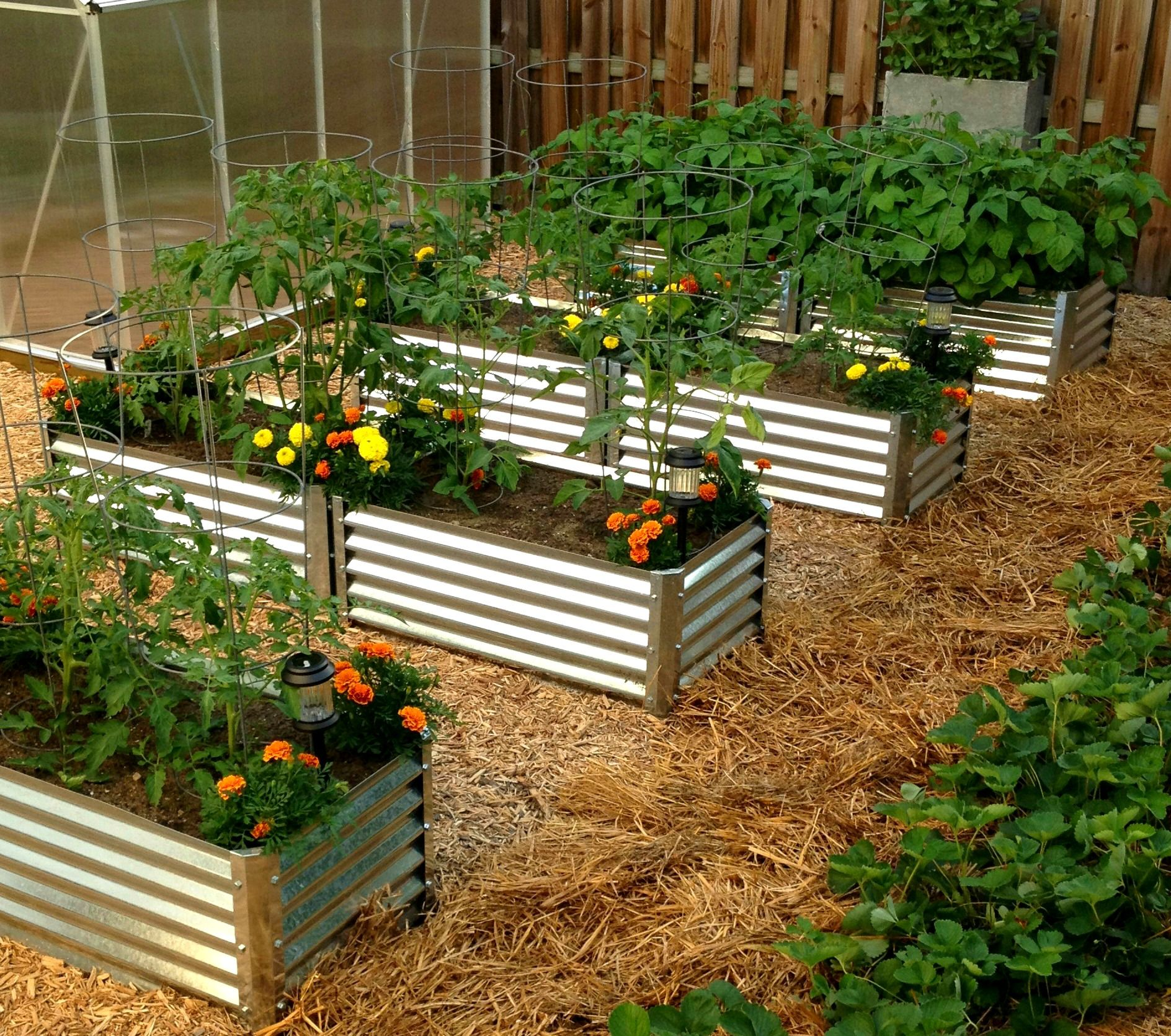 Metal garden beds 100 recyclable galvanized steel material no more wood rot unique garden for Best material for raised garden beds