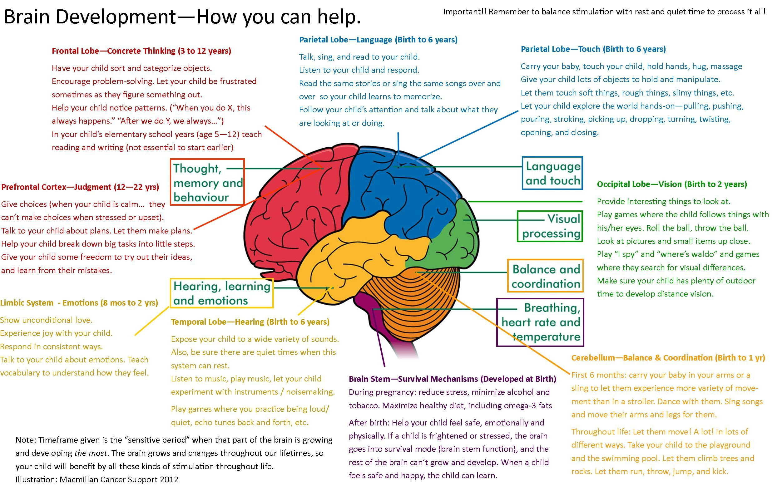 Brain Functions And Map