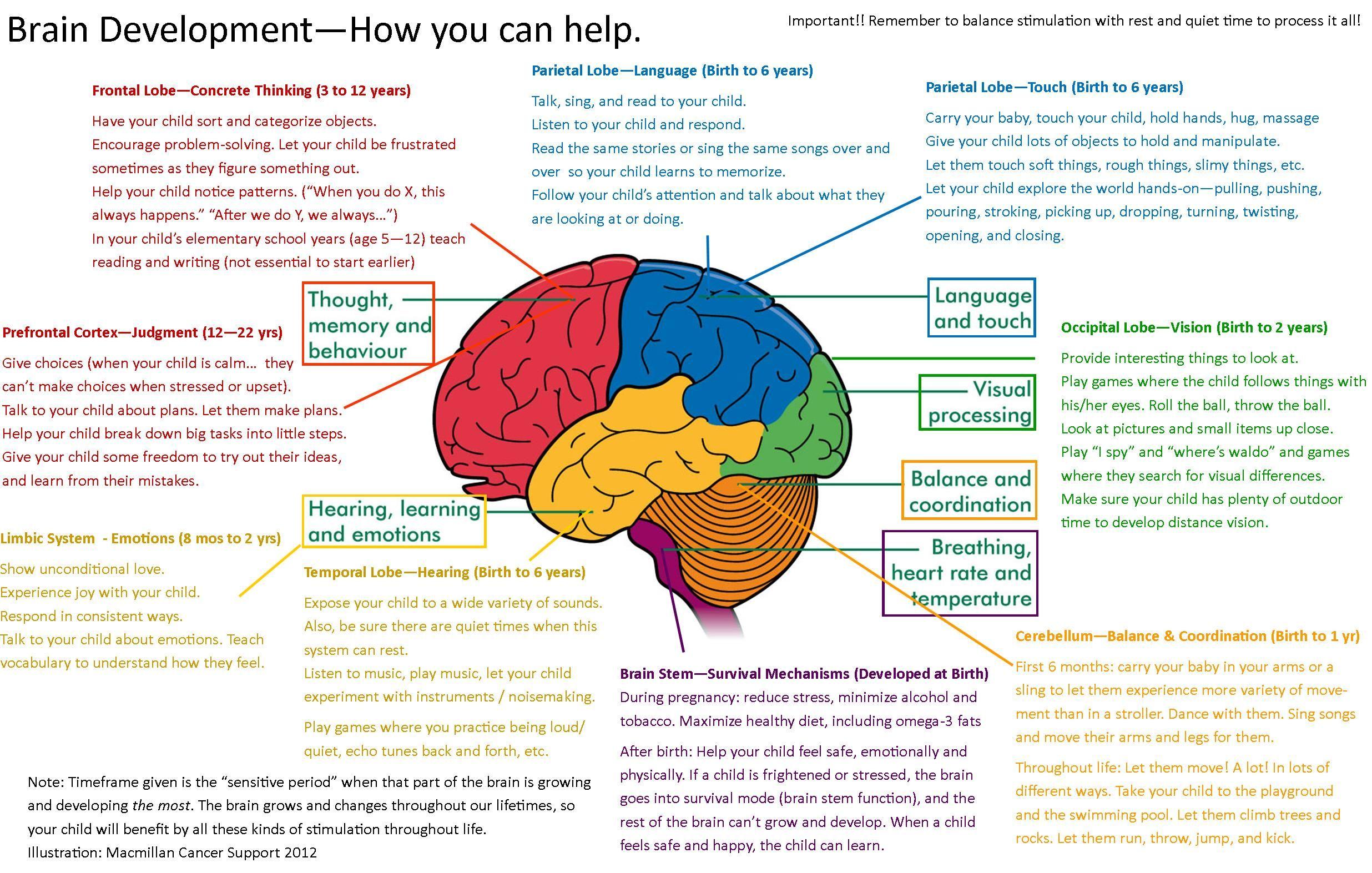 Brain Development Mapping | Brain mapping, Brain ...