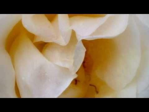 Yanni - Mother Night | Yanni | Yanni music, Music clips, Music