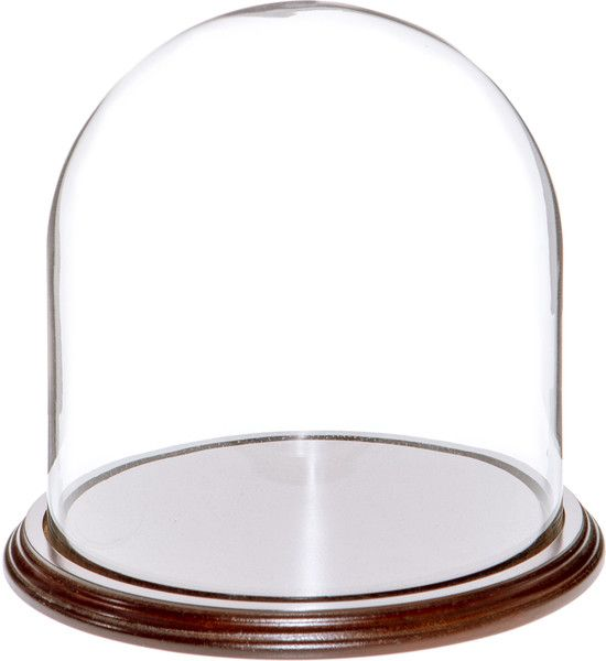 "Plymor Brand 4.5/"" x 6/"" Glass Display Dome Cloche Walnut Veneer Base"