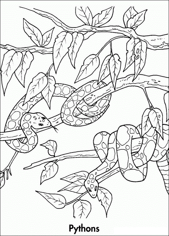 Python Colouring In InColoring PagesEndangered SpeciesRainforests PythonColouring