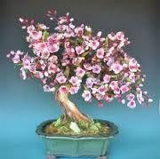Arboles Miniatura Bonsai Con Alambre Ile Ilgili Gorsel Sonucu Flores De Porcelana Fria Porcelana Fria Porcelana