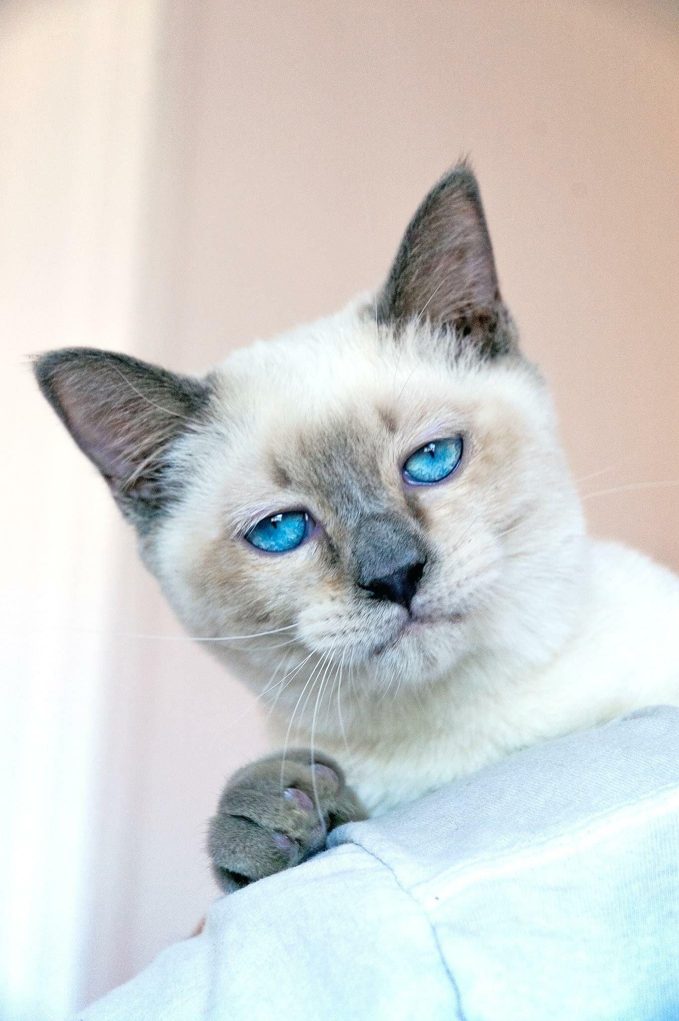 Common Cat Ailments How To Resolve Them Naturally Cat Ailments Sick Cat Cat Care