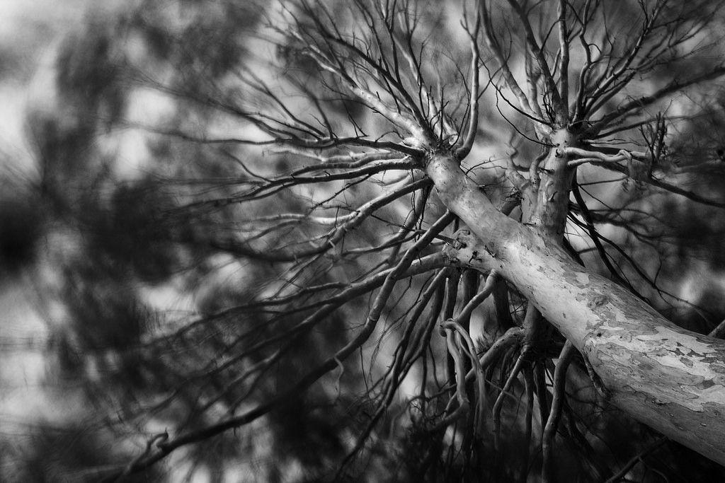 Explore Rocío Lozano / rolozanoi@gmail.com photos on Flickr. Rocío Lozano / rolozanoi@gmail.com has uploaded 125 photos to Flickr.