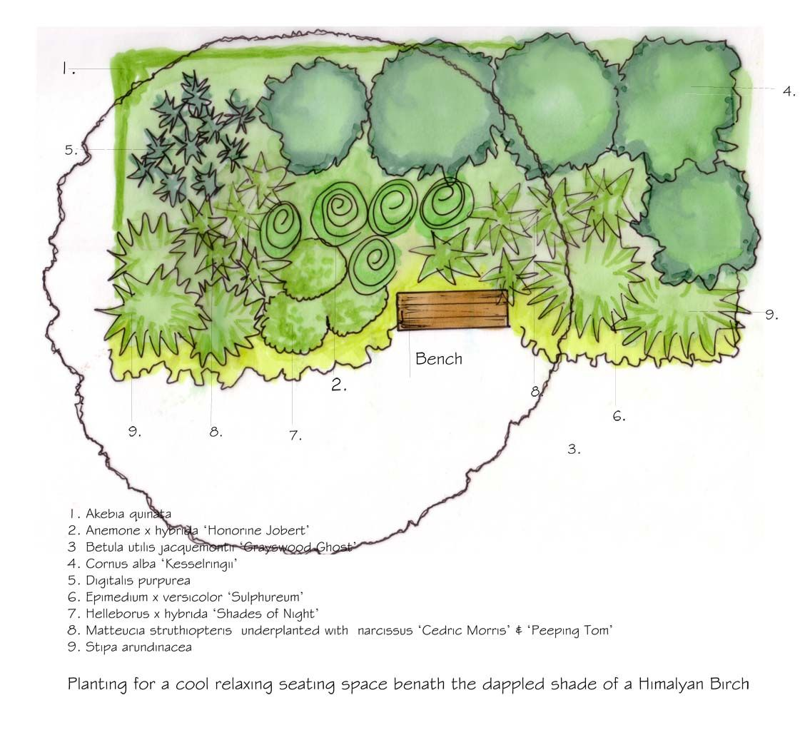 Shady Shrub Border Planting Plan
