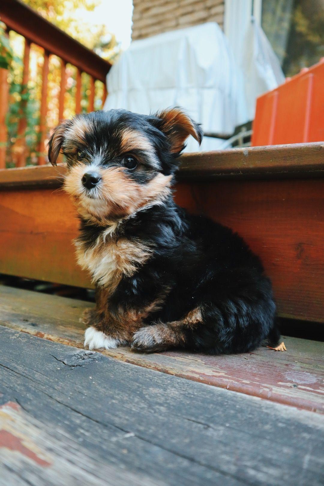 I got a puppy bringing him home first few days