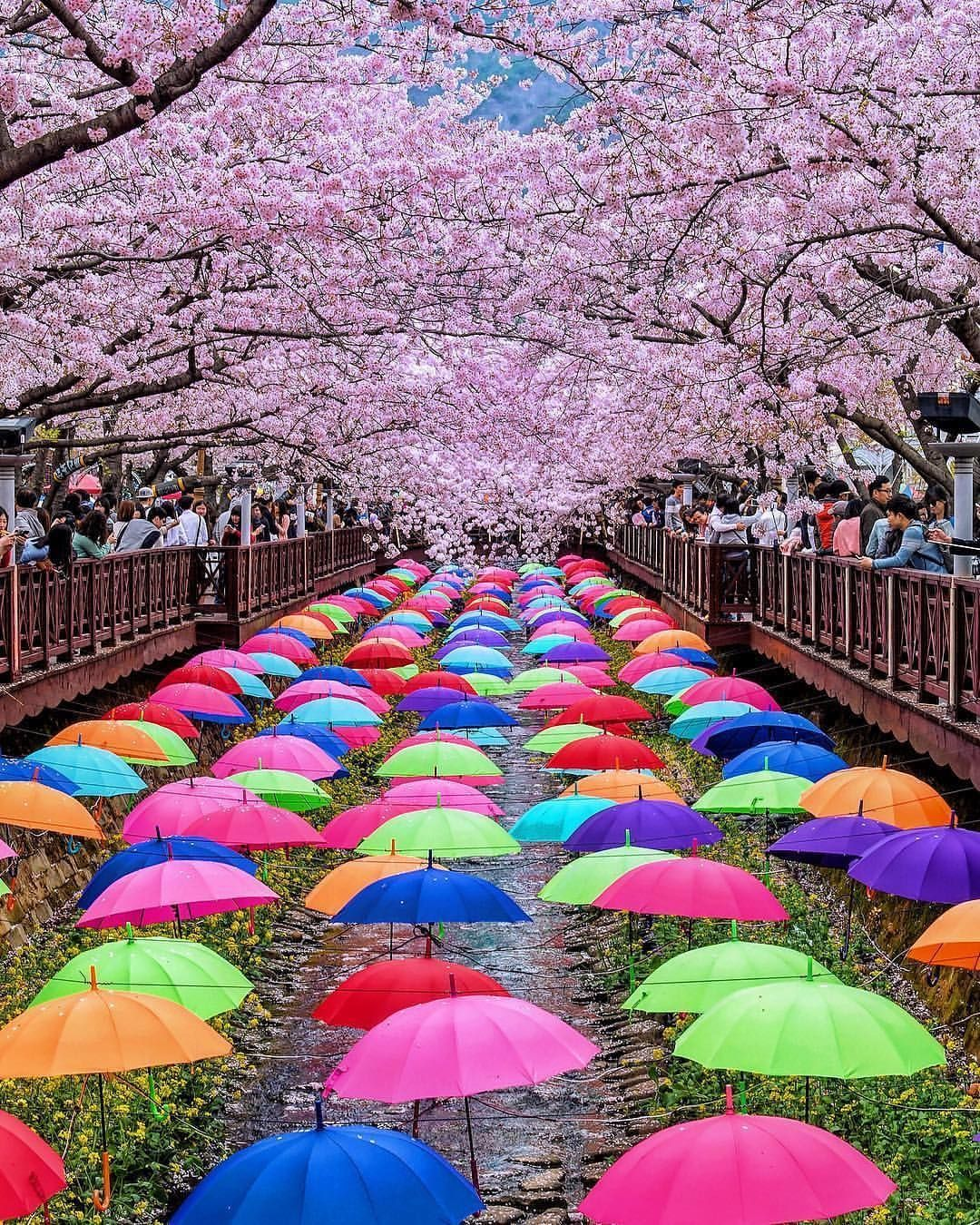 Seoul Has The Perfect Spot For A Guaranteed Instagram Banger Photo By Jackmartinphotoar Cherry Blossom Festival Cherry Blossom Japan South Korea Photography