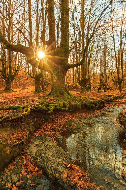 Bright and beautiful autumn #autumnscenery