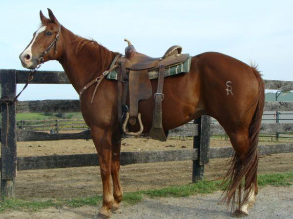 Two Eyed Docker - Sorrel Quarter Horse Mare 1998    $1500