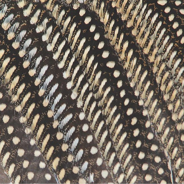 The graphic pattern from our Fowl Feathers design makes a fascinating image when printed across a tabletop... This dark brown, organic pattern would look beautiful in a neutral room!