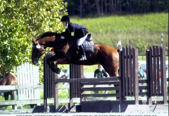 My Anna , comes in 4th in the adult division, riding -Honorable  Bob. Seest thou a man diligent in his business? NC Tryon Trials.