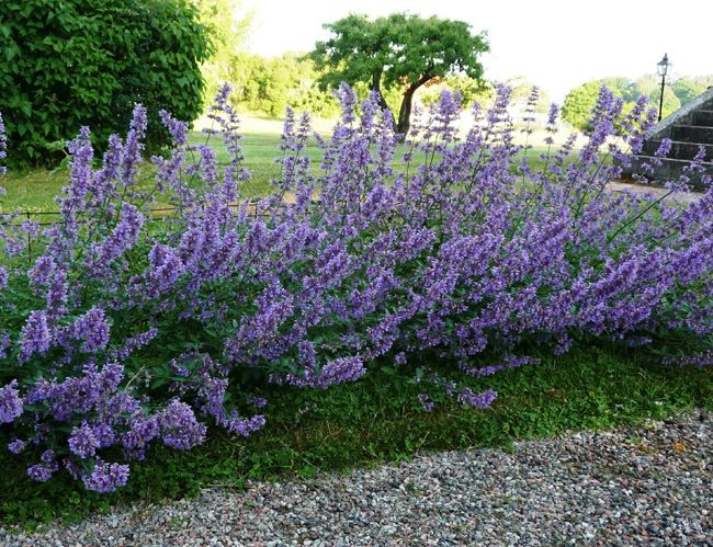 Best Perennial For New England Gardens Letters From Stonewell Perennial Garden Best Perennials Perennials