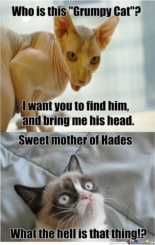 40+ Grumpy Cat Memes That You Will Love!   FallinPets is part of Grumpy cat humor - Everyone's probably seen Tardar Sauce   the feline better known as Grumpy Cat   and her pretty mug at one