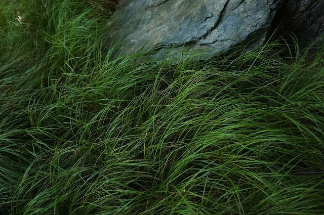 the freshness of grass near water soothes the eyes /// la porte rouge: the water, the flesh and the flame