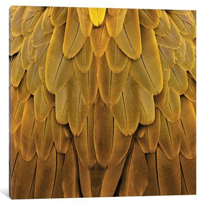 "East Urban Home 'Feathered Friend in Golden' Photographic Print on Canvas Size: 18"" H x 18"" W x 0.75"" D"