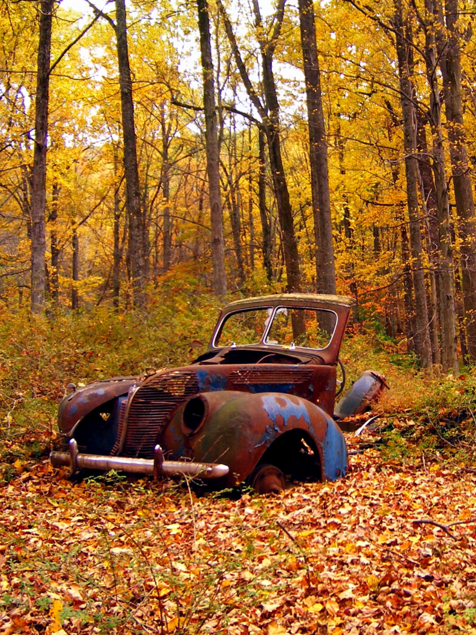 Rusty Cars In The Woods Source Facebook Com Beautiful Vintage