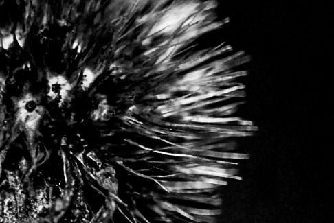 Bwphotography Bnw Photo Bw Lover Minimal Monochrome Photographers On Tumblr