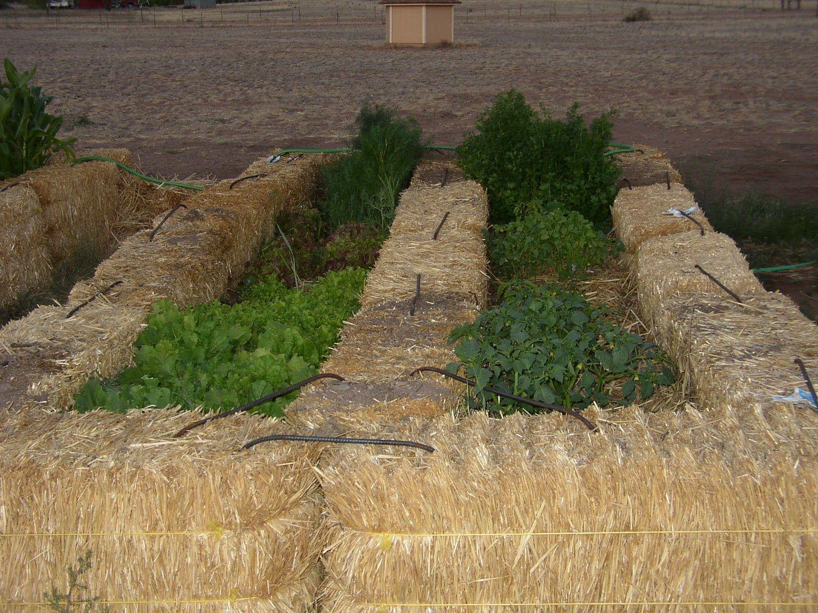 straw bale gardening - Google Search   Kertészet -- Gardening ...