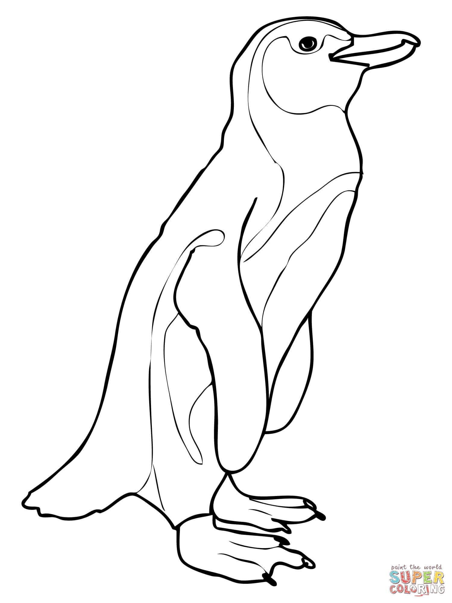 African Penguin Aka Jackass Penguin Coloring Page