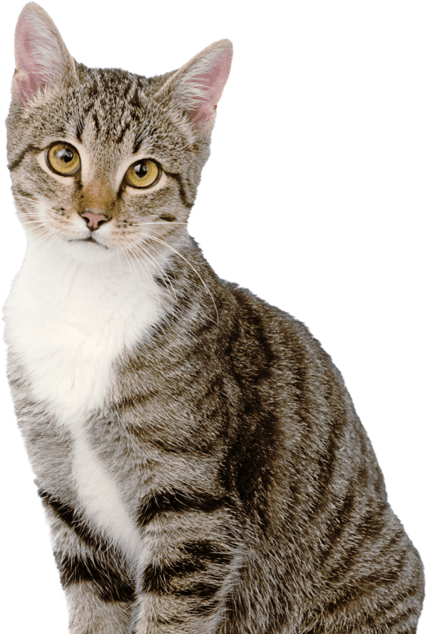 Can Cats Eat Ham? What Is Safe & Unsafe to Feed Your