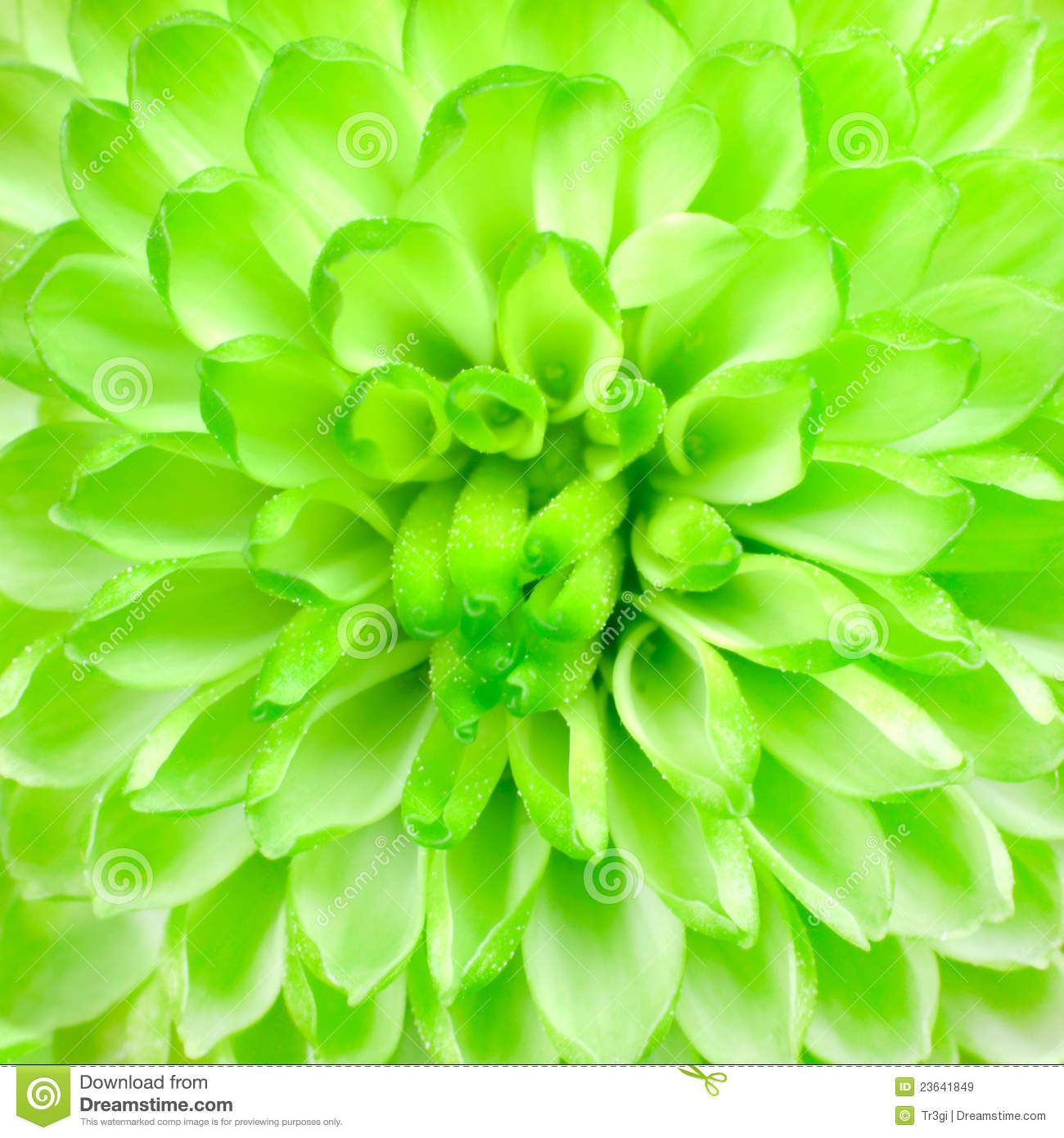 Lime Green Background Green Gradient Background With White