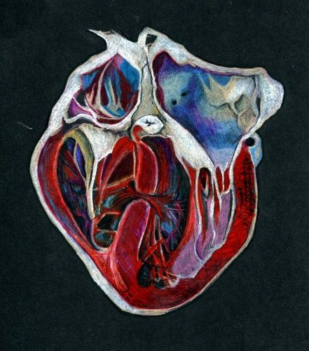 Such an awesome drawing of the human heart.